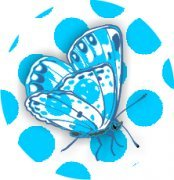 Capricious Collection Butterfly & Fish Air Fresheners
