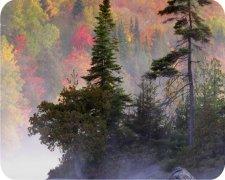 Forest Mist Air Freshener - My Air Freshener
