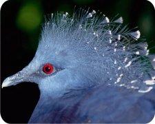 Eco Friendly Air Fresheners | My Air Freshener - Exotic Bird - My Air Freshener