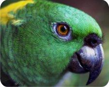 Green Parrot Air Freshener - My Air Freshener