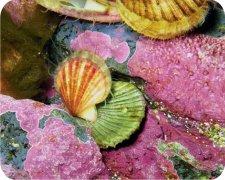 Seashells Air Freshener
