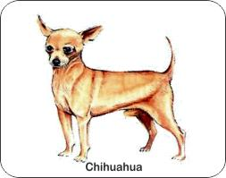 Chihuahua Dog Air Freshener | My Air Freshener