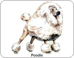 Poodle Dog Air Freshener | My Air Freshener