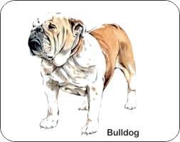 Bulldog Dog Air Freshener | My Air Freshener
