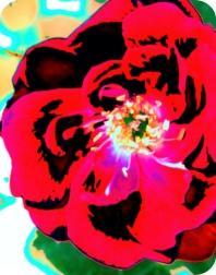 CAREFREE Flower Air Freshener | My Air Freshener