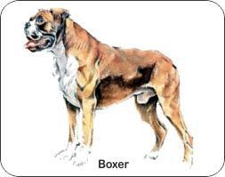 Boxer Dog Air Freshener | My Air Freshener