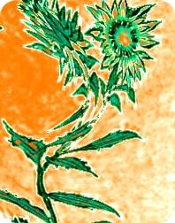 AMUSING Flower Air Freshener | My Air Freshener
