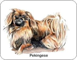 Pekingese Dog Air Freshener   My Air Freshener