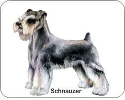 Schnauzer Dog Air Freshener | My Air Freshener