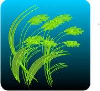 Eco Friendly Air Fresheners | My Air Freshener - Grass | My Air Freshener