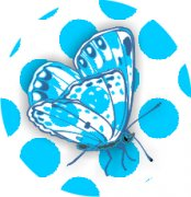 Turquoise Beauty Butterfly Car Air Freshener | My Air Freshener