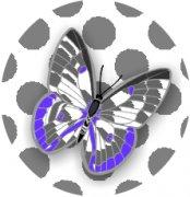 Sweet Mystery Butterfly