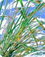 SILENCE Flower Air Freshener