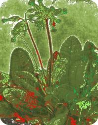 TRANQUILITY Flower Air Freshener | My Air Freshener